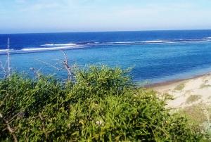 Faux Cap Madagascar
