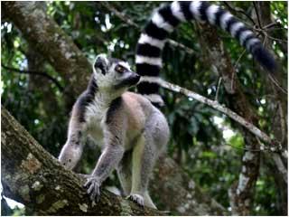 Nahampoana lemur reserve